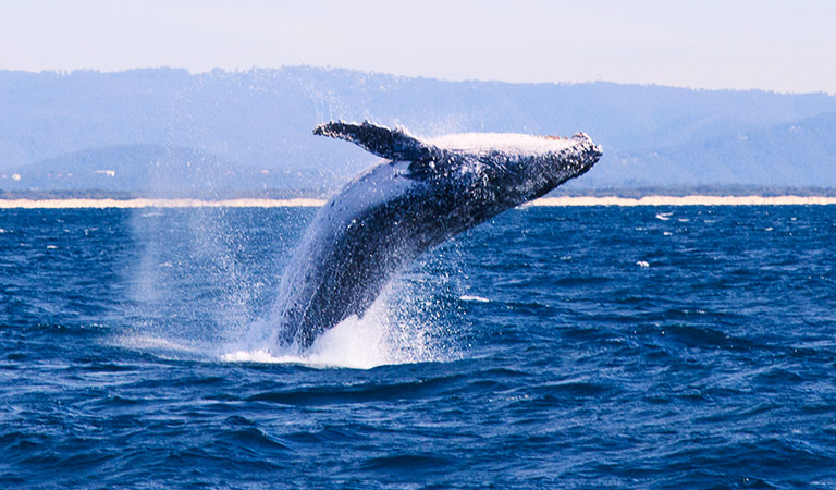 Whale Watching Package - Hotel Abrego Monterey California